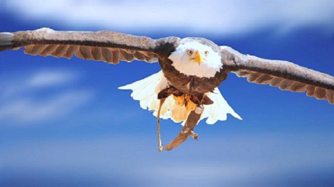 Inspire Se Com A águia Encorajando Vidas